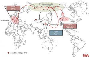 Global spridningen av fågelinfluensa.